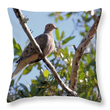 Throw Pillow featuring the photograph Morning Dove by Rosalie Scanlon