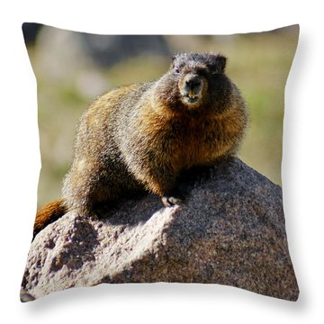 Morning Marmot Throw Pillow