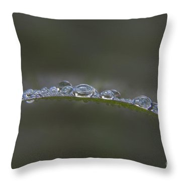 Morning Raindrops On Wild Grass Throw Pillow by Darleen Stry
