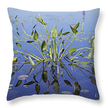 Morning Reflection Throw Pillow by Eunice Gibb