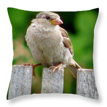 Morning Visitor Throw Pillow by Rory Sagner