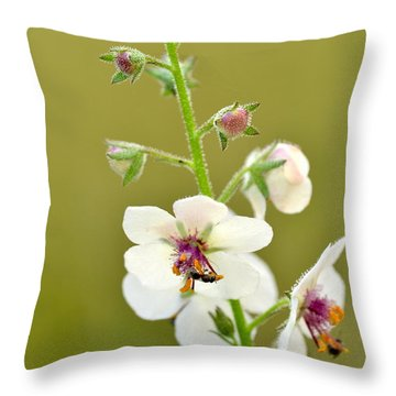 Throw Pillow featuring the photograph Moth Mullein by JD Grimes