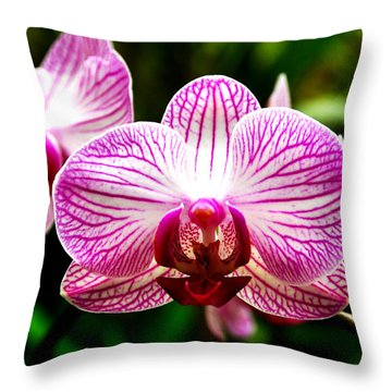Throw Pillow featuring the photograph Moth Orchid by Pravine Chester