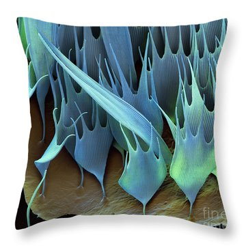 Moth Wing Scales Sem Throw Pillow by Eye of Science