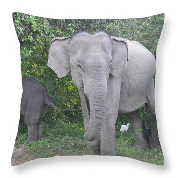 Mother Elephant And Baby Throw Pillow