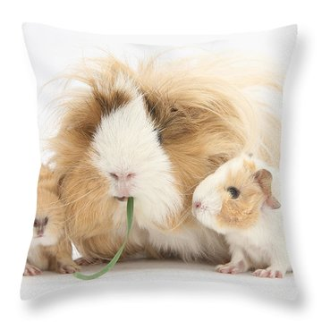 Mother Guinea Pig And Baby Guinea Throw Pillow by Mark Taylor