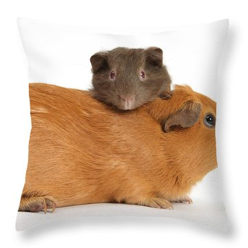 Mother Guinea Pig With Baby Guinea Pig Throw Pillow by Mark Taylor