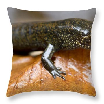 Mountain Dusky Salamander Throw Pillow by Dustin K Ryan