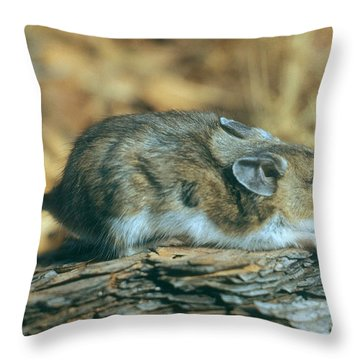 Mouse On A Log Throw Pillow by Photo Researchers, Inc.