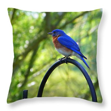 Mr Bluebird Throw Pillow by Judy Wanamaker