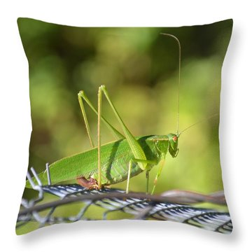 Throw Pillow featuring the photograph Mr Grasshopper by Mary Zeman