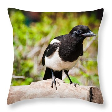 Throw Pillow featuring the photograph Mr. Magpie by Cheryl Baxter
