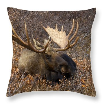 Throw Pillow featuring the photograph Much Needed Rest by Doug Lloyd