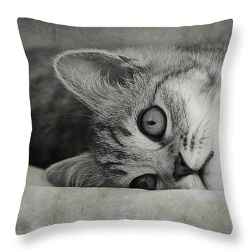 Muffin Throw Pillow by Claudia Moeckel