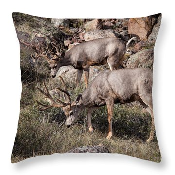 Mule Deer Bucks Throw Pillow by Ronald Lutz