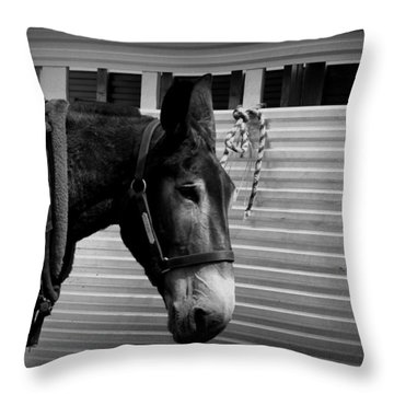 Mule - Tied Up For A While Throw Pillow by Travis Truelove