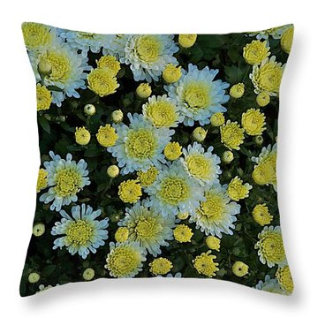 Throw Pillow featuring the photograph Mums by Joseph Yarbrough
