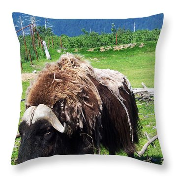 Musk Oxen Throw Pillow by Aimee L Maher Photography and Art Visit ALMGallerydotcom