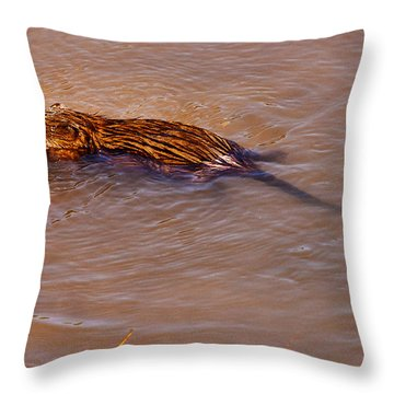 Muskrat Swiming Throw Pillow
