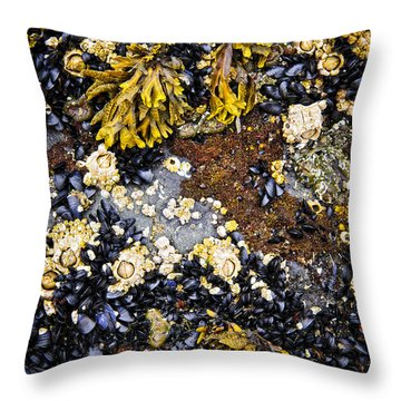 Mussels And Barnacles At Low Tide Throw Pillow by Elena Elisseeva