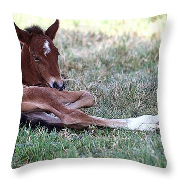 Mustang Filly Throw Pillow by Elizabeth Hart