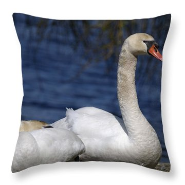 Mute Swans By Lagoon Throw Pillow by Sharon Talson