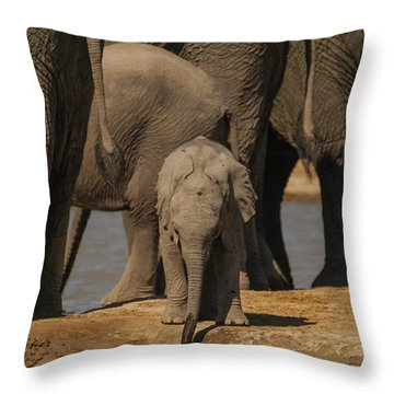 My Own Pool Throw Pillow