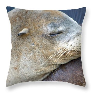 Napping Throw Pillow by Gwyn Newcombe