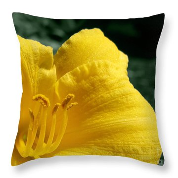 Throw Pillow featuring the photograph Natures Candelabra by Arlene Carmel