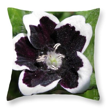 Nemophilia Named Penny Black Throw Pillow by J McCombie