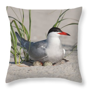 Nesting Common Tern Throw Pillow by Clarence Holmes