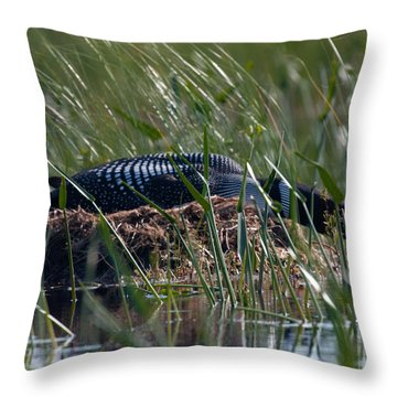 Nesting Loon Throw Pillow by Brent L Ander