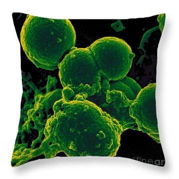 Neutrophil Ingesting Mrsa Bacteria, Sem Throw Pillow by Science Source