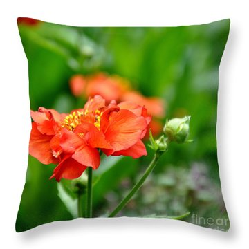 Throw Pillow featuring the photograph Never Boring Red And Green by Tanya  Searcy