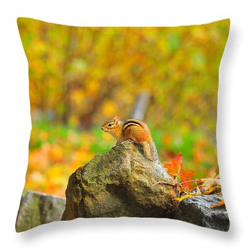 New Hampshire Chipmunk Throw Pillow by Catherine Reusch Daley