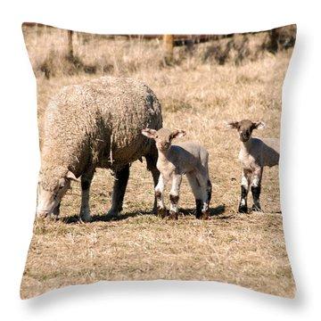New Lambs Throw Pillow