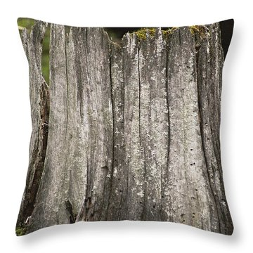 New Life In The Form Of A Spruce Throw Pillow