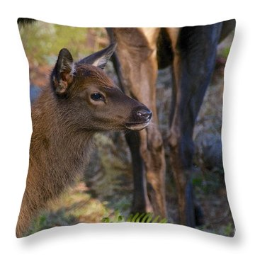 Newborn Elk Throw Pillow by Sean Griffin