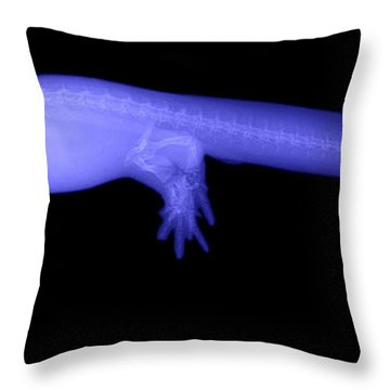 Newt Throw Pillow by Ted Kinsman