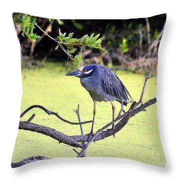 Night-heron Throw Pillow by Al Powell Photography USA