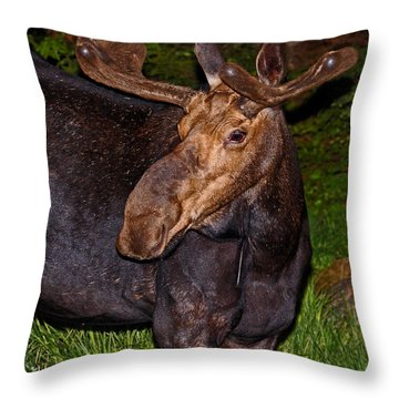 Night Moose 1 Throw Pillow by Lloyd Alexander
