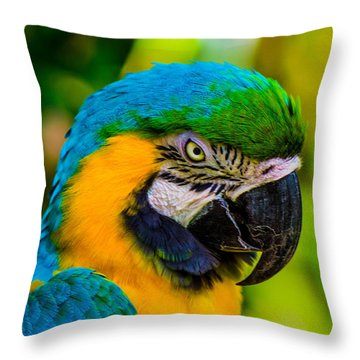 No More Crakers Throw Pillow by Shannon Harrington