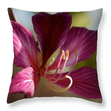 North Park Throw Pillow by Joseph Yarbrough
