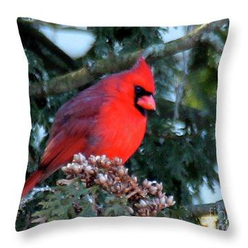Northern Cardinal Male Throw Pillow
