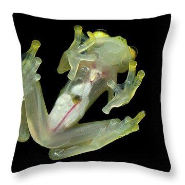 Northern Glassfrog Hyalinobatrachium Throw Pillow by Thomas Marent