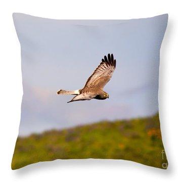 Northern Harrier Flight Throw Pillow by Mike  Dawson
