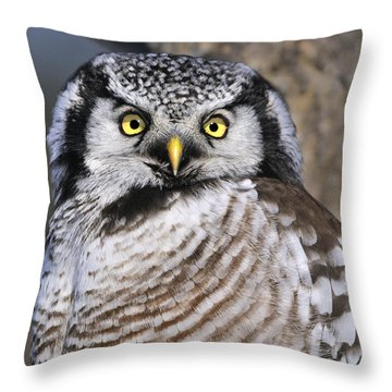Northern Predator Throw Pillow by Tony Beck