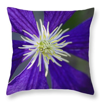 Not Shy Throw Pillow by Rich Franco