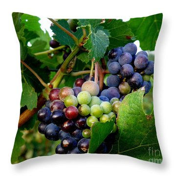 Not Yet Throw Pillow by Lainie Wrightson