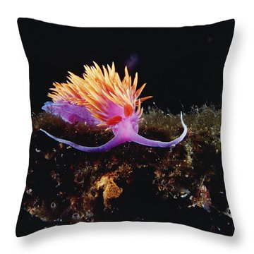 Nudibranch Brightly Colored Arctic Ocean Throw Pillow by Flip Nicklin